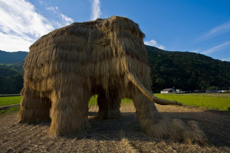 setouchi- straw mammoth  2