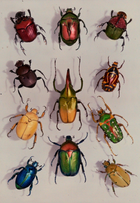 scarabs Edwin L. Wisherd, national geo 1929
