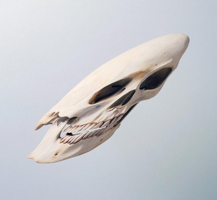 robert-lazzarin-skull-2000