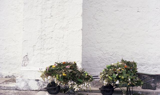 Sarah Bodri flowers