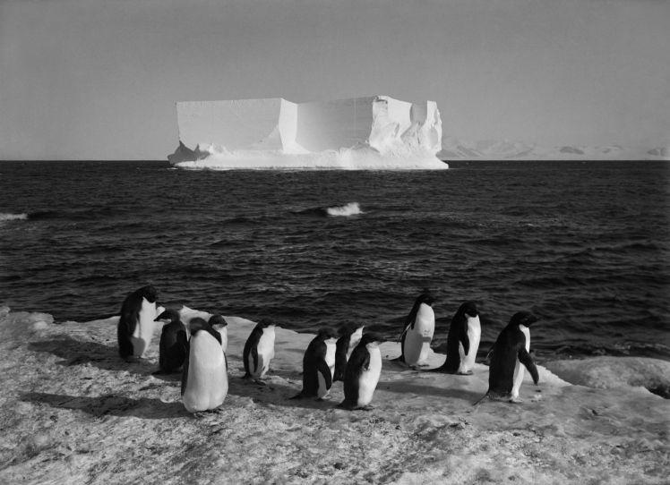 Ponting_Penguins