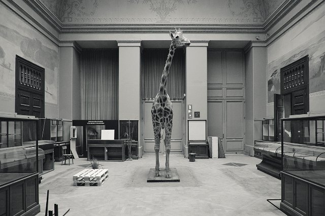 restoration of Royal Museum for Central Africa Belgium