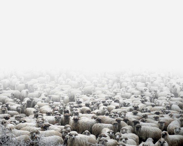 Tamas_Dezso_Epilogue_sheep farm