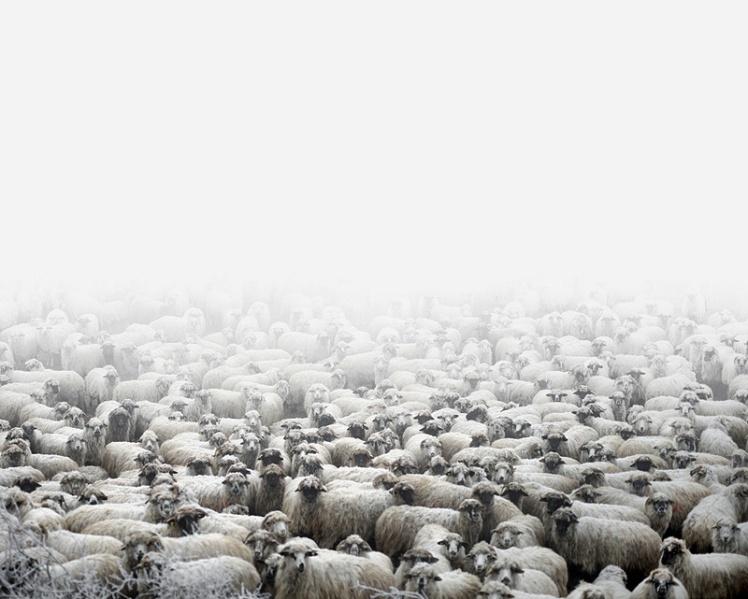 Tamas_Dezso_Epilogue_sheep farm