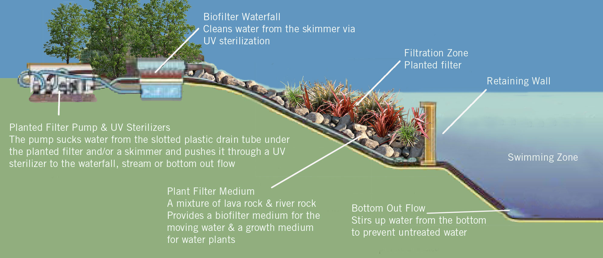 Bio swimming pools the self cleaning mini ecosystems - How to make a natural swimming pool ...
