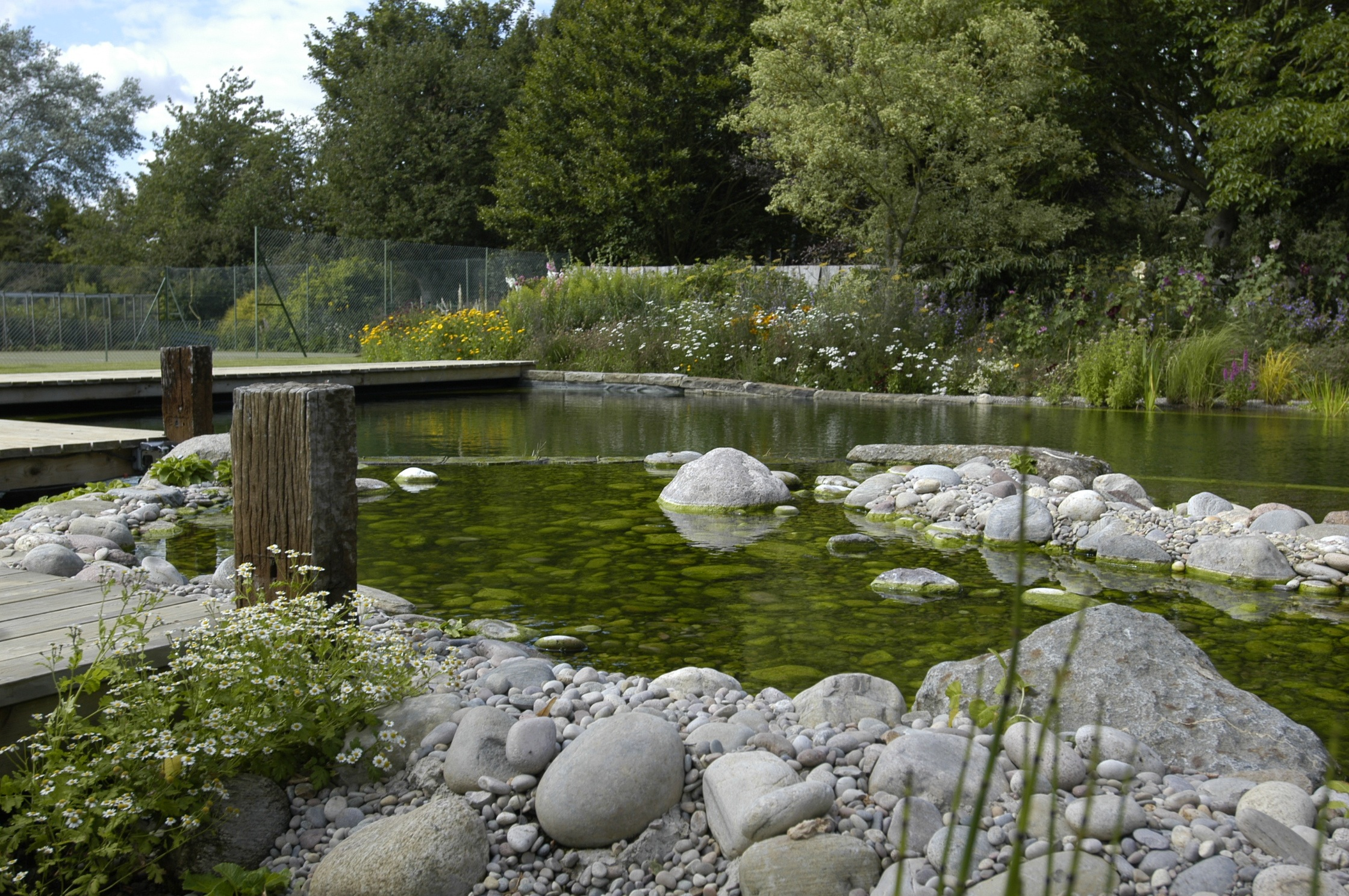 Bio swimming pools the self cleaning mini ecosystems for Pond aquatics