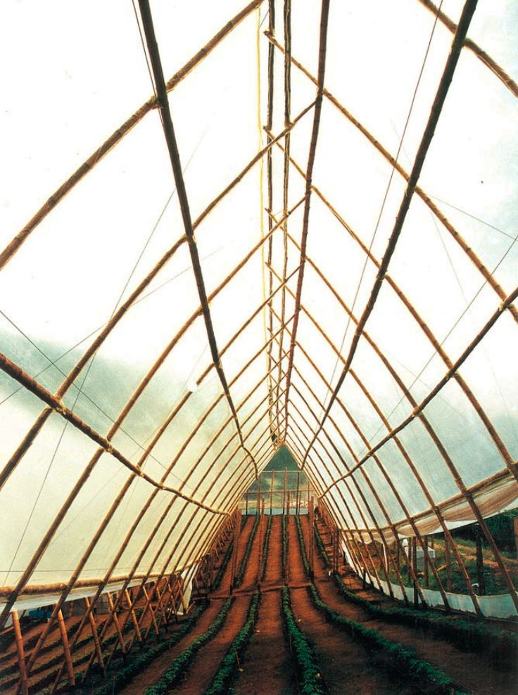 bamboo_greenhouse