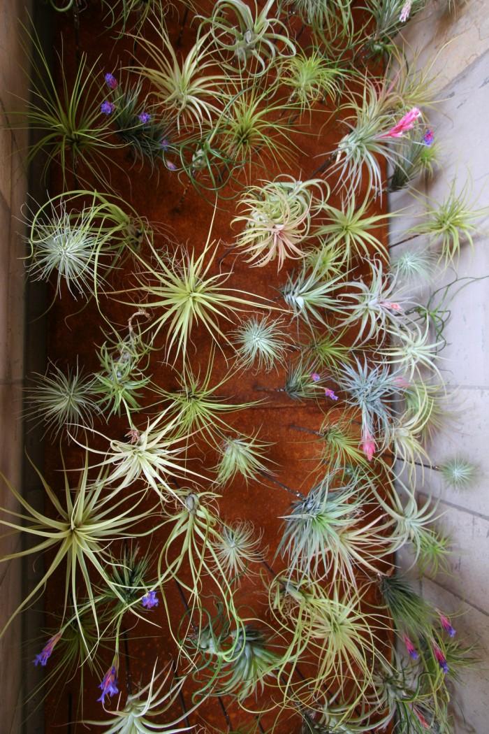flora grubb vertical gardens wewastetime. Black Bedroom Furniture Sets. Home Design Ideas
