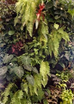 Woolly Pocket Flora Grubb Gardens 4